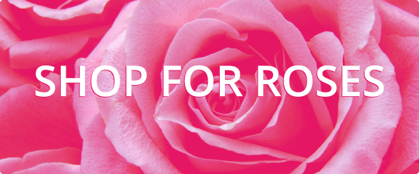 Shop for wholesale Roses