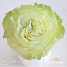 Rosa bg scented garden candle light 50cm