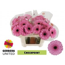 Gerbera checkpoint water