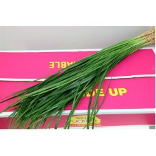 Lilly grass large 70cm