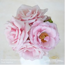 Rosa sp scented pink majolica 50cm
