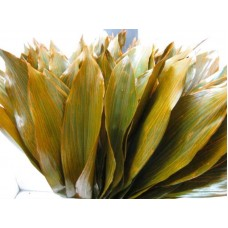 Aspidistra g orange 70cm