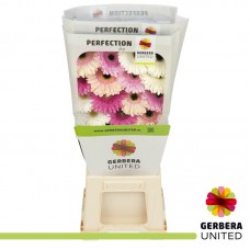 Gerbera diag pastel mix diamond 45cm