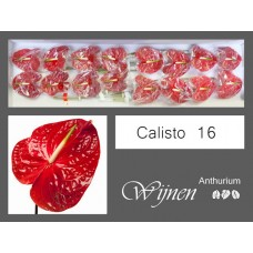Anth calisto red 13 cm
