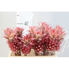 Ananas super mini 40 cm