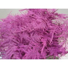 Buy Asperagus extra feathers cerise 65 cm wholesale dyed