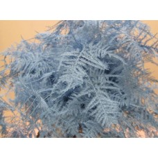 Asperagus extra feathers ice blue 65cm