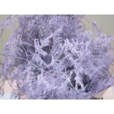 Buy Asperagus extra feathers lavender 65 cm wholesale dyed