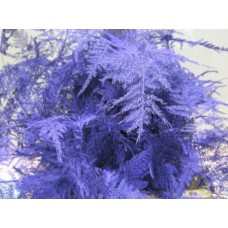 Asperagus 1e feathers purple 45 cm