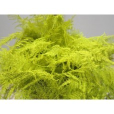 Buy Asperagus extra feathers yellow 65 cm wholesale dyed