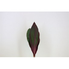 Cordyline leaves red 40 cm