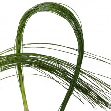 Flexigrass 90 cm x bunches