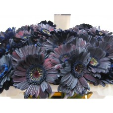 Buy Germini g black 50 cm wholesale dyed