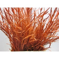 Buy Grevillea orange 80 cm wholesale dyed