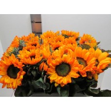 Helianthus orange 75cm
