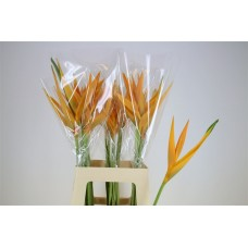 Heliconia opal yellow sr 70 cm
