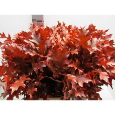 Oak leaves palus red 75cm