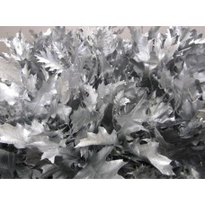 Oak leaves rubra silver 20 cm