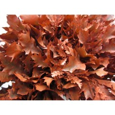 Oak leaves rubra terracotta 20 cm