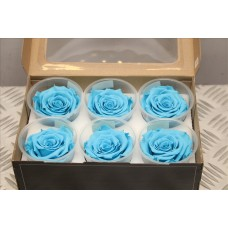 Preserved rose blue-01