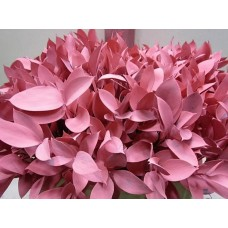 Ruscus pink 60cm A1