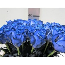 Buy Rosa bg athena blue 50cm 50 cm wholesale dyed