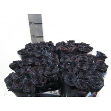 Buy Rosa bg red naomi black 70 cm wholesale dyed