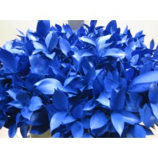Buy Ruscus blue 60 cm Wholesale dyed