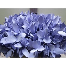 Buy Ruscus milka 60 cm Wholesale dyed