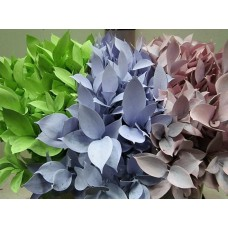 Buy Ruscus pastel mix 60 cm wholesale dyed