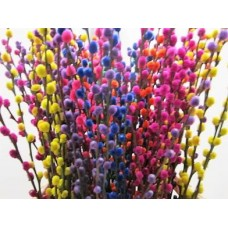 Buy Salix kittens mix 70 cm wholesale dyed