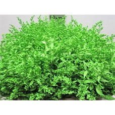 Buy Solidago green 80 cm wholesale dyed