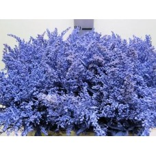 Buy Solidago blue 80 cm wholesale dyed