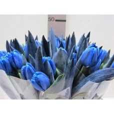 Tulip colored blue 38 cm