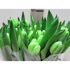 Tulip colored green 38 cm