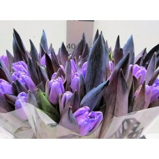 Tulip colored light milka 38 cm