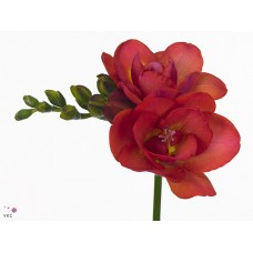 Freesia do red bell 50 cm