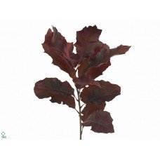 Oak leaves red