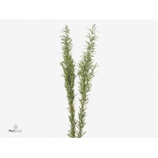 Rosemary 50 cm x bunches