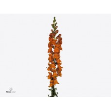 Antirrhinum potomac dark orange 100 cm