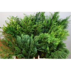 Conifer bag mix 50 cm