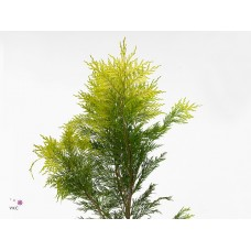 Conifer bag yellow 50 cm