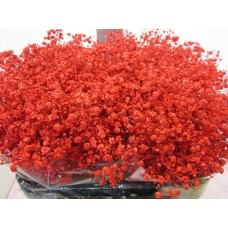 Gipsophilla xlence red 80 cm