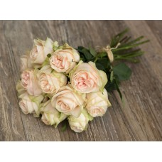 Rosa bg garden wedding spirit 50 cm