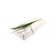 Lily grass 60cm x BUNCHES